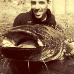 Pêche du Silure